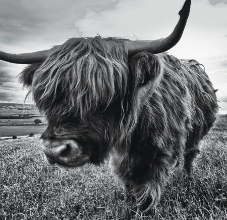 Folder Design Scotland